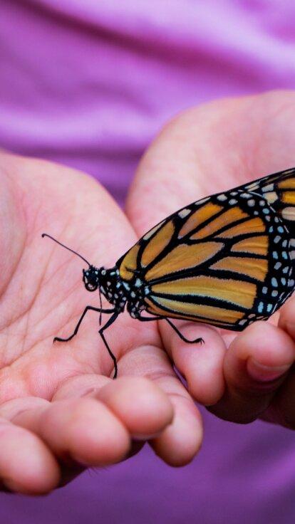 Ich bin Ich & Du bist Du Von der Raupe zum Schmetterling