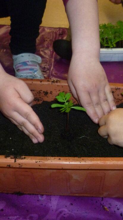 Konzeptionelle Arbeit des Teams während des Lockdown Naturkunde: Unser Pflanzenprojekt